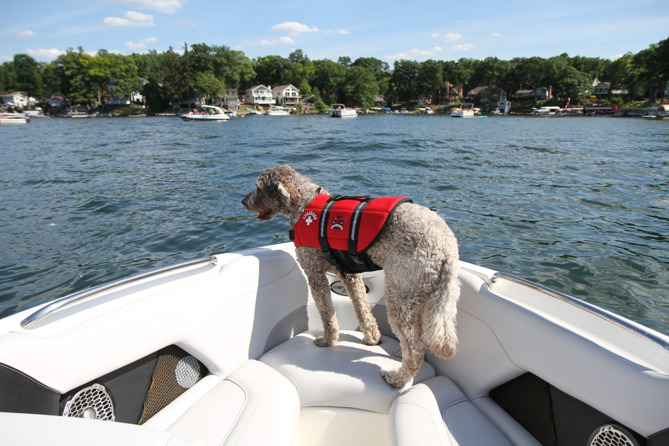 Dogs on Boats – Safety & Tips